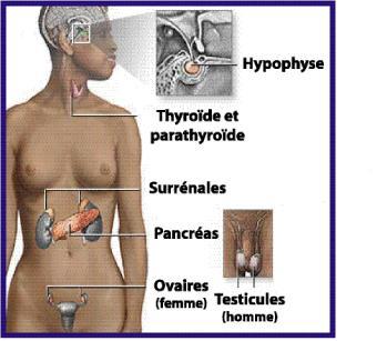 Clinica Medicaltop Bacau - cabinete medicale specializate - Endocrinologie
